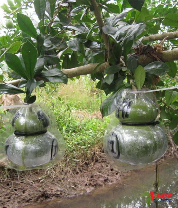 """Đào Tiên Hồ Lô Tài Lộc được sản xuất từ trái đào tiên,Khuôn sản xuất đào tiên hồ lô cũng giống như khuôn làm bưởi hồ lô. Cho hình nổi hai bên mặt quả đào tiên với hai chữ """"Tài Lộc"""" có ý nghĩa mang lại Sức Khỏe, Tài Lộc, Trường Thọ cho gia chủ."""